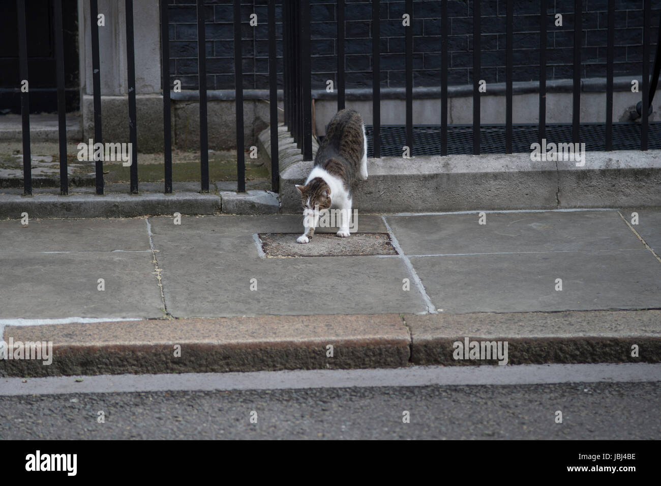 Downing Street, London, UK. 9th June, 2017. Larry the cat outside No 10 Downing Street - Stock Image