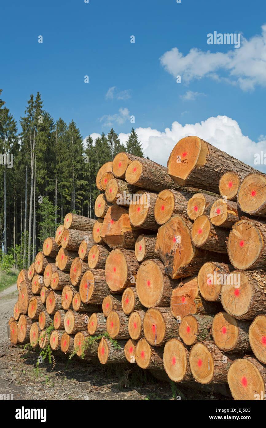 Holzwirtschaft in Deutschland Stock Photo