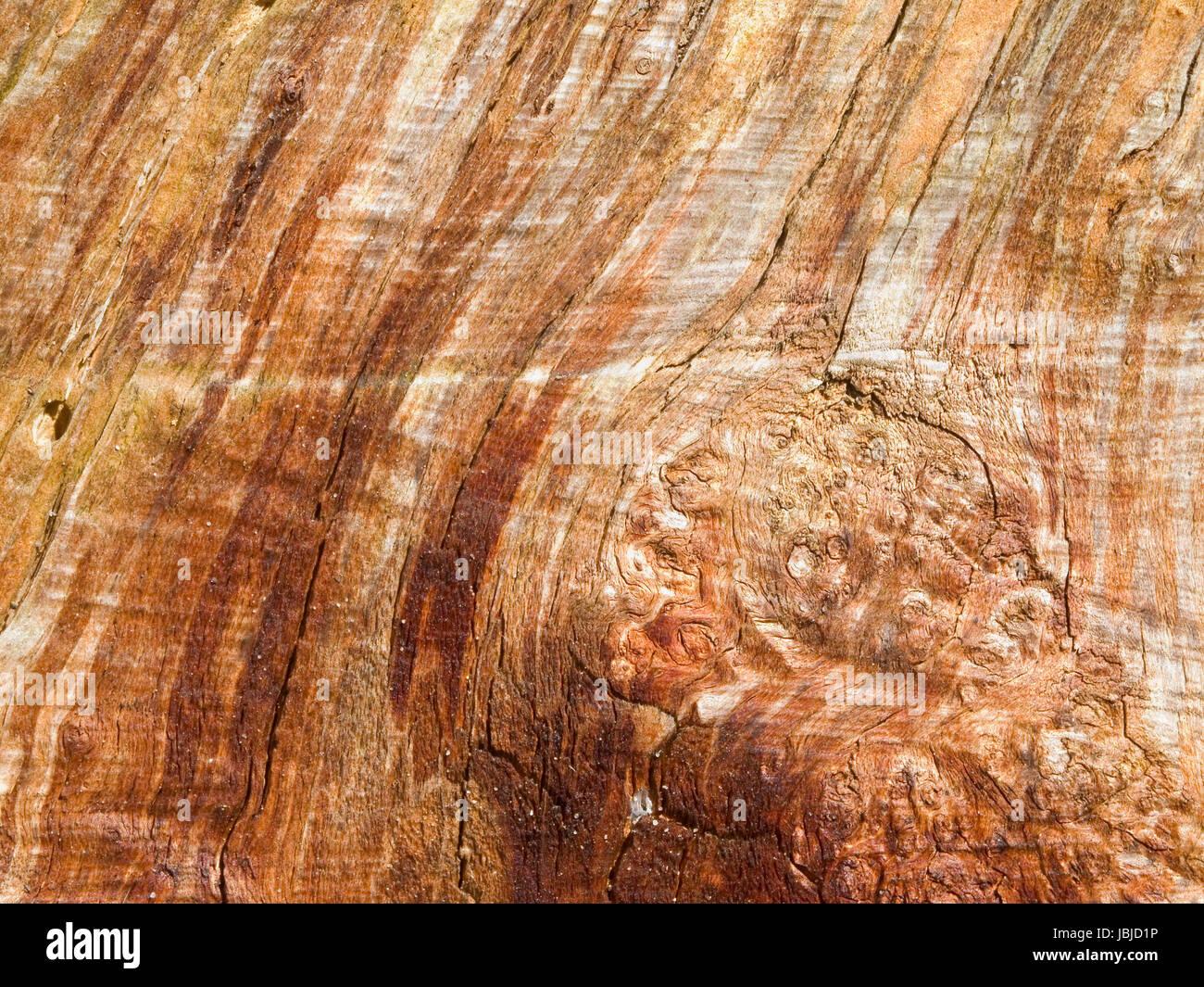 formatfüllende Seiten-Ansicht auf einen alten und rindenlosen Baumstupf - Stock Image