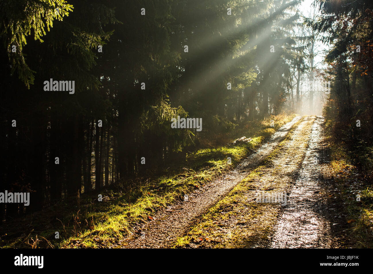 Forest path with lovely rays of sunlight Stock Photo