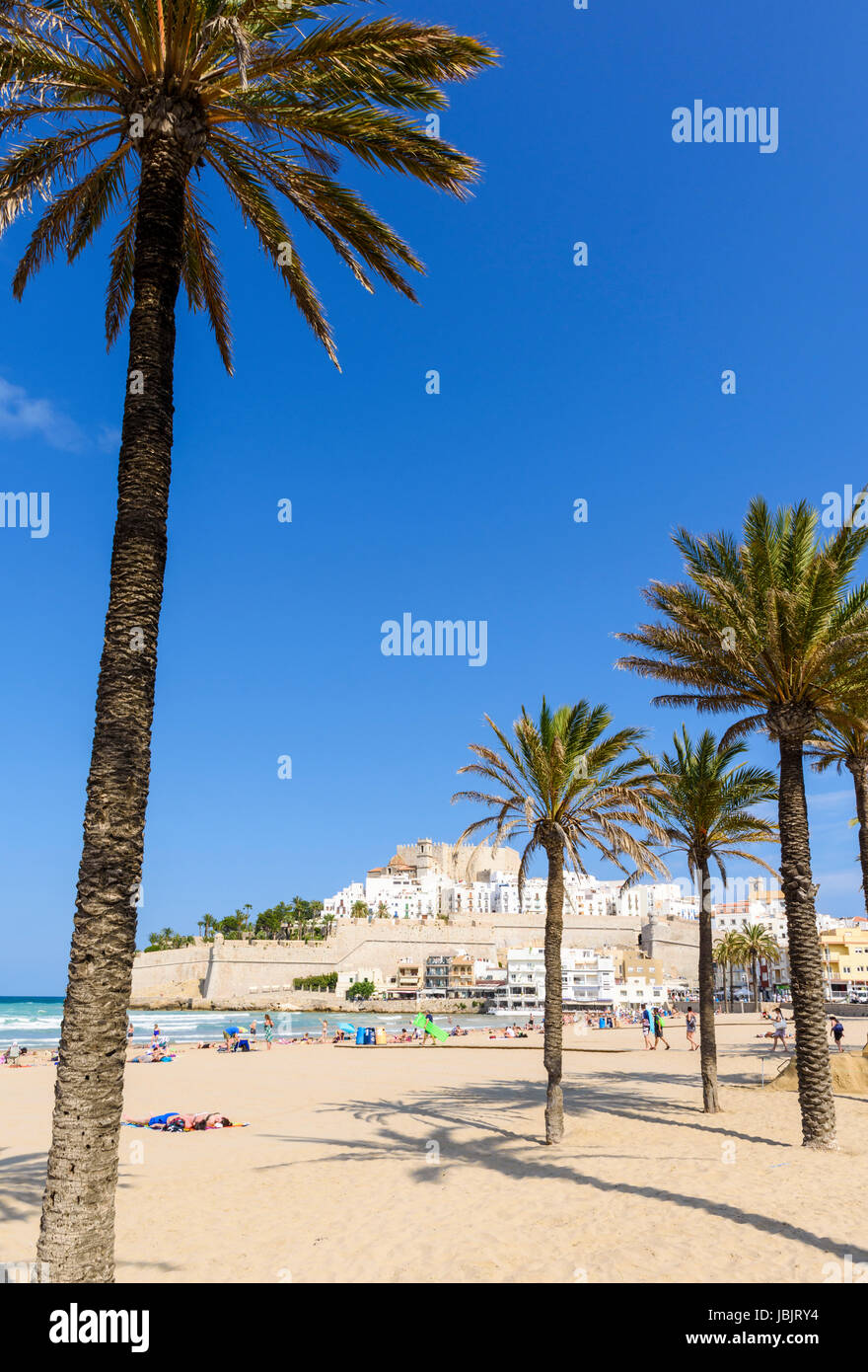 Palm trees on Playa Norte beach overlooked by Papa Luna Castle and old town, Peniscola, Spain - Stock Image