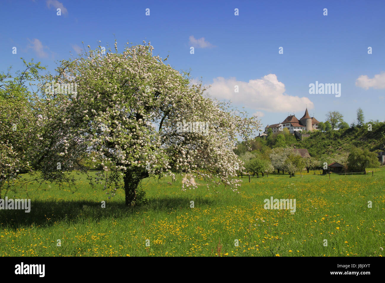 spring in erlach - Stock Image