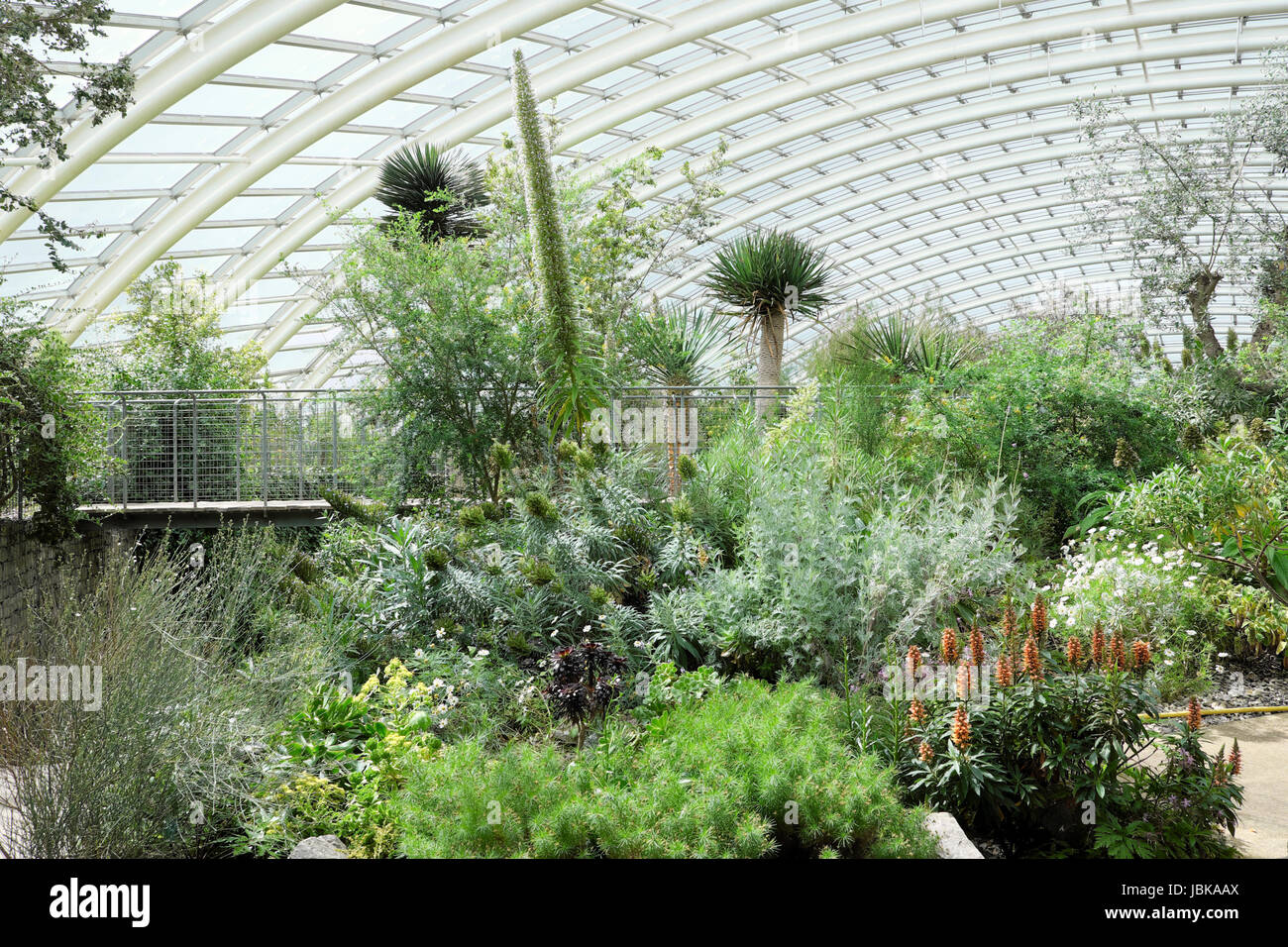 Norman Foster Great Glasshouse interior at the NATIONAL BOTANIC GARDEN OF WALES UK   KATHY DEWITT - Stock Image