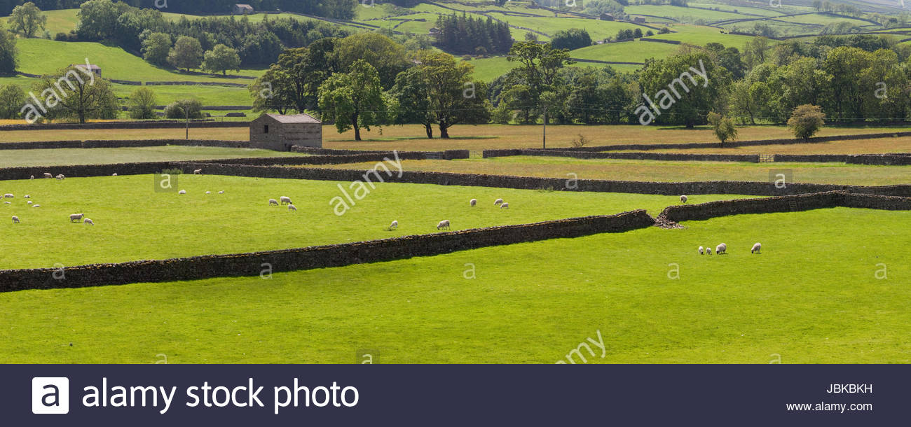 Summer meadows at Askrigg Bottoms, Wensleydale, Yorkshire Stock Photo