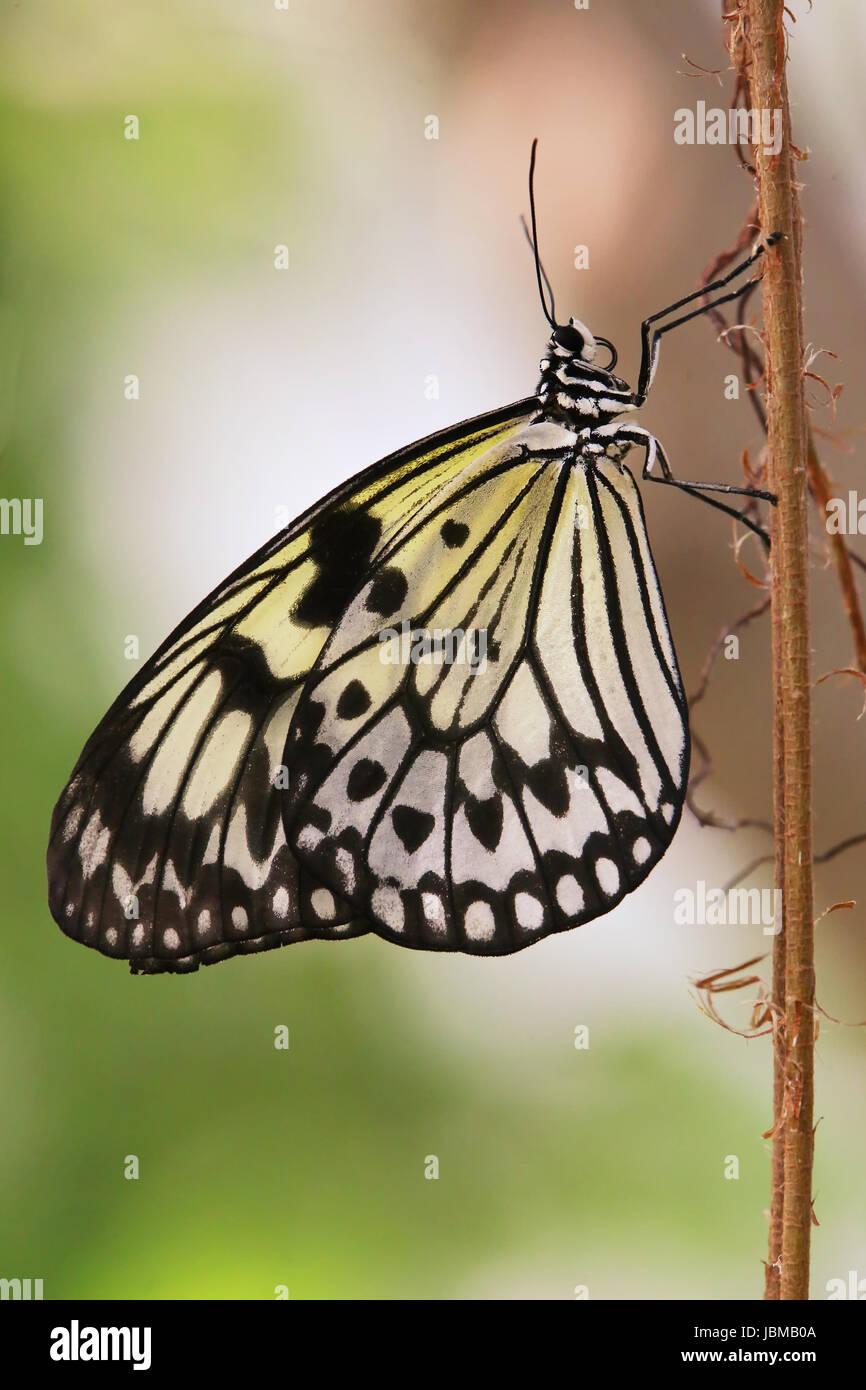 exotic moth Stock Photo