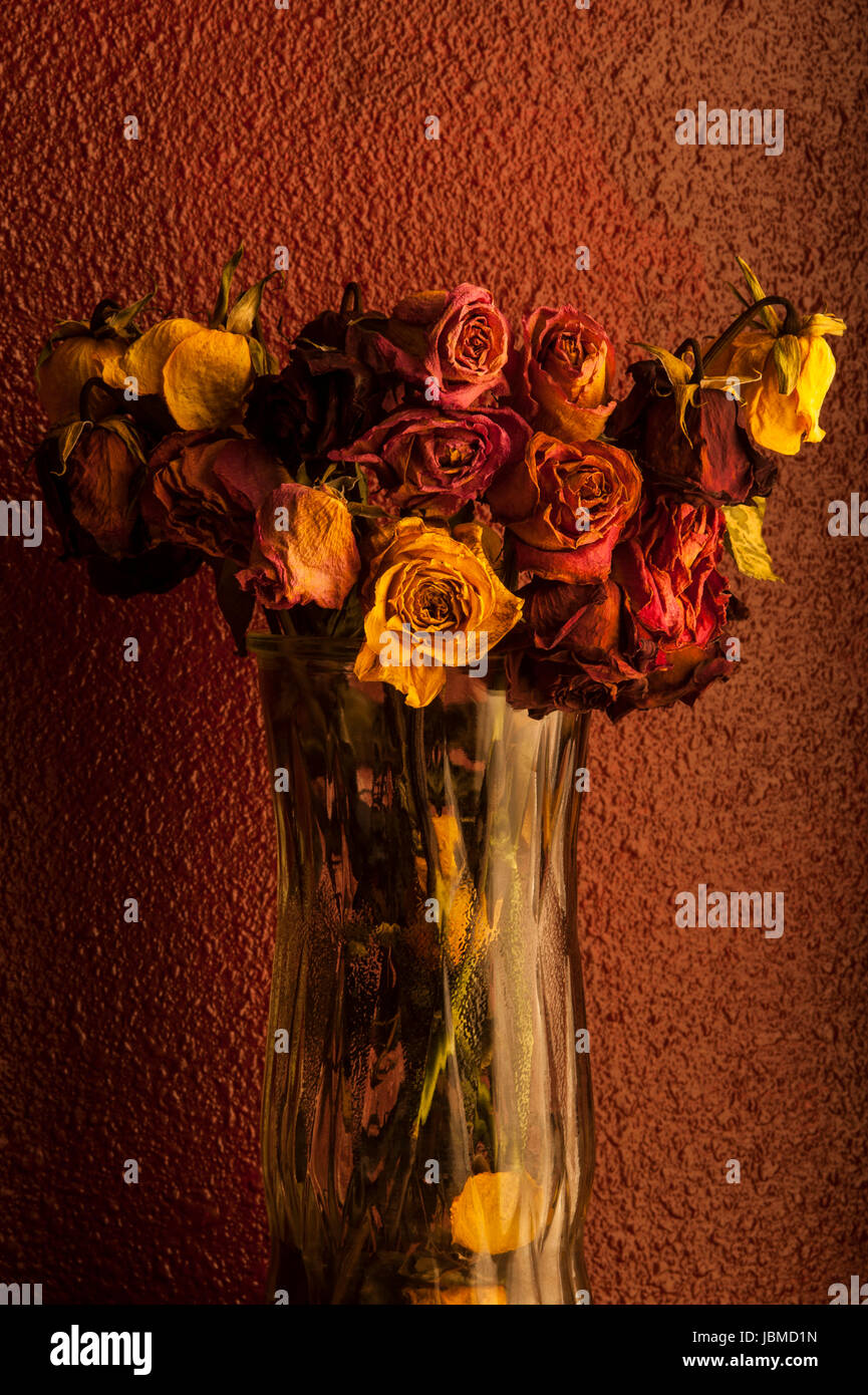 Multicolored roses wilting in glass vase with warm window light Stock Photo
