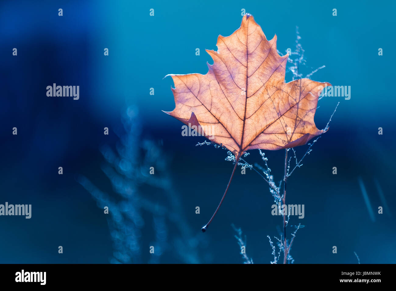 Autumn leaf - Stock Image