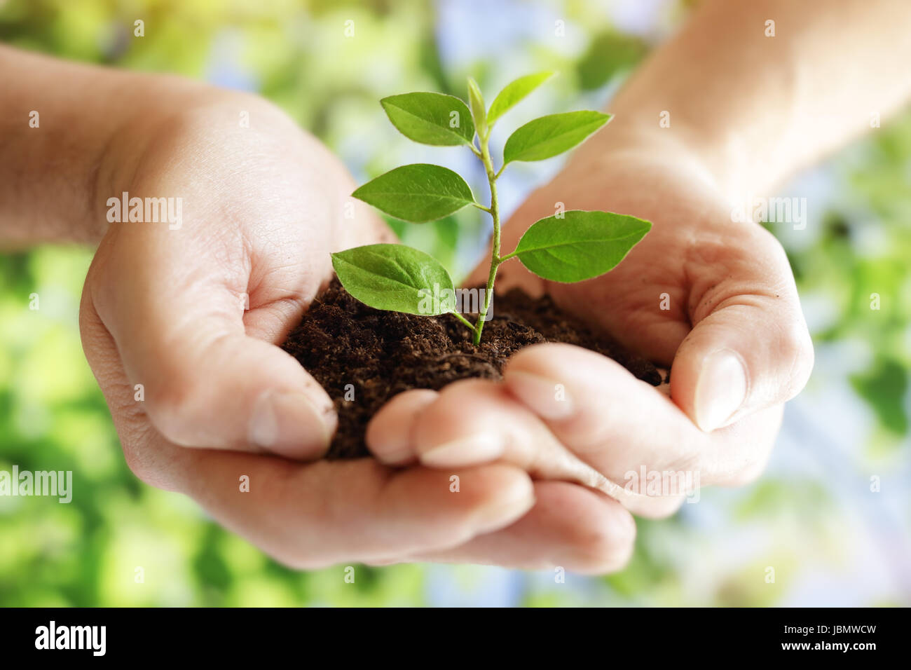 Taking care of new development hands holding new life plant - Stock Image