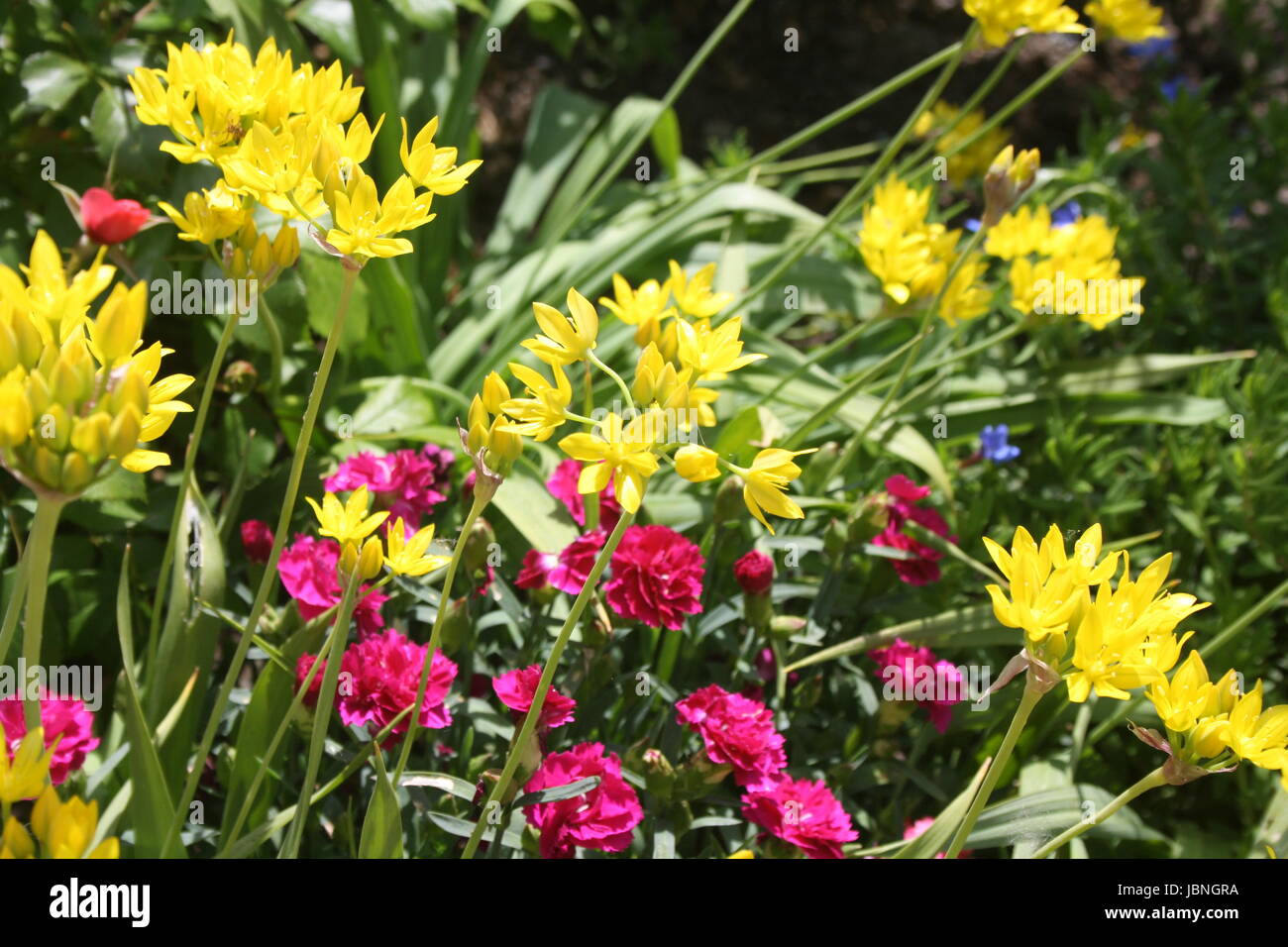 colorful summer flowers - Stock Image