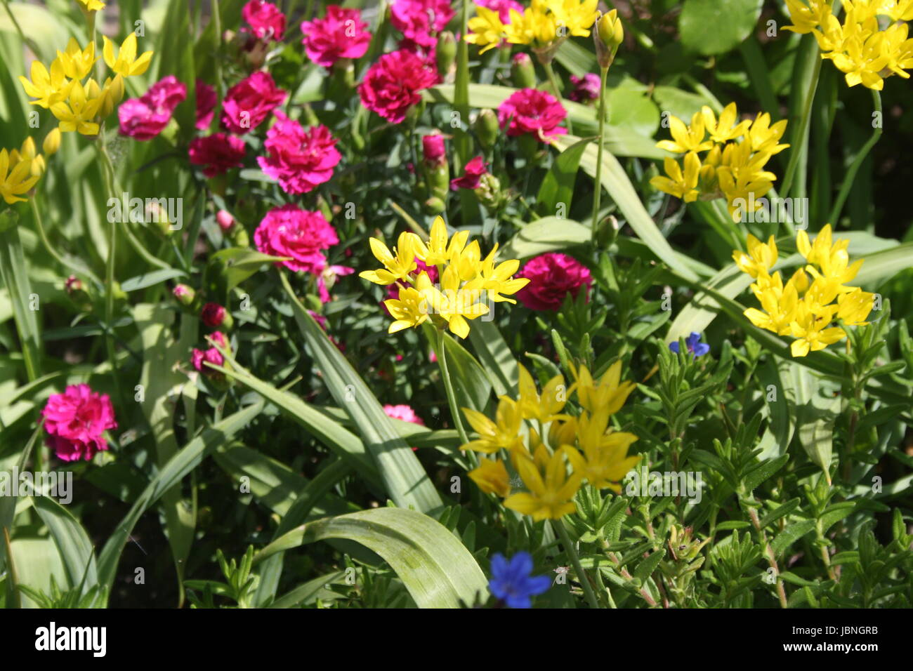colourful summer flowers - Stock Image