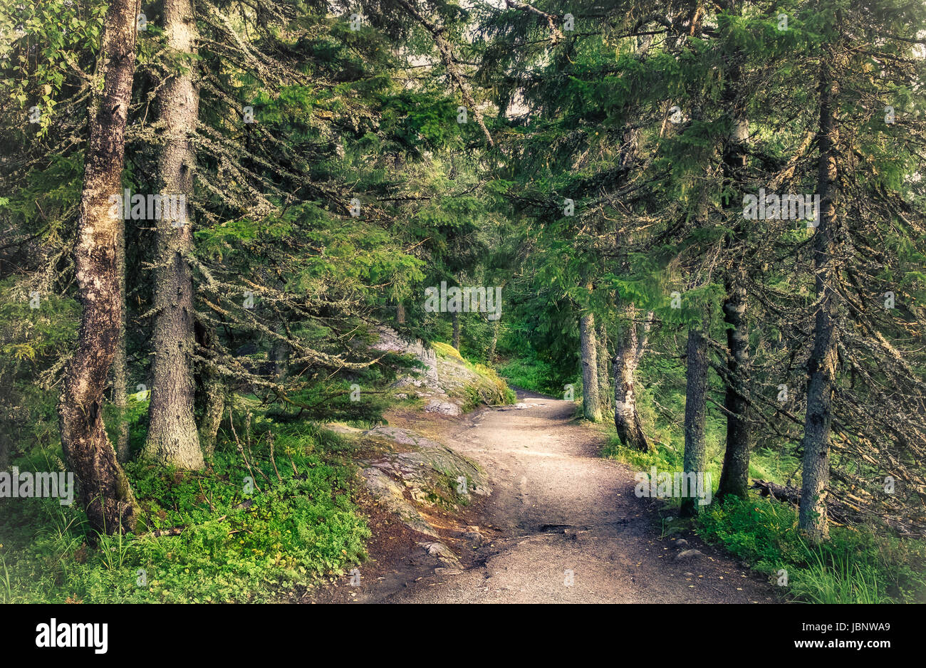 Primeval forest with path at summer day in Koli, national park, Finland - Stock Image