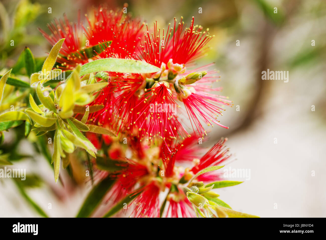 Tropical Plant 2 - Stock Image