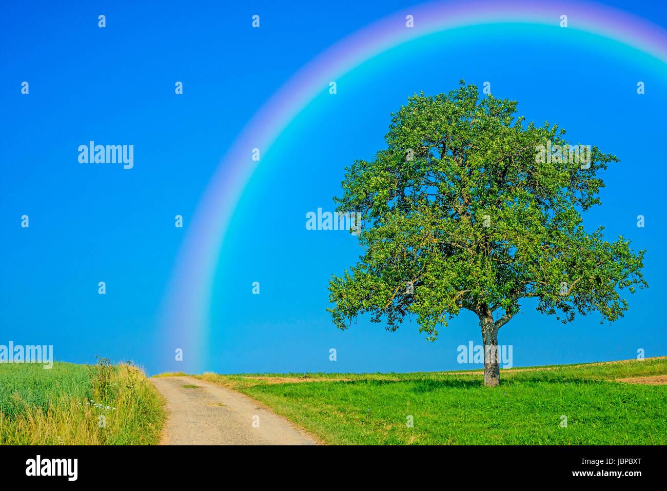 Weg mit Obstbaum und Regenbogen Stock Photo