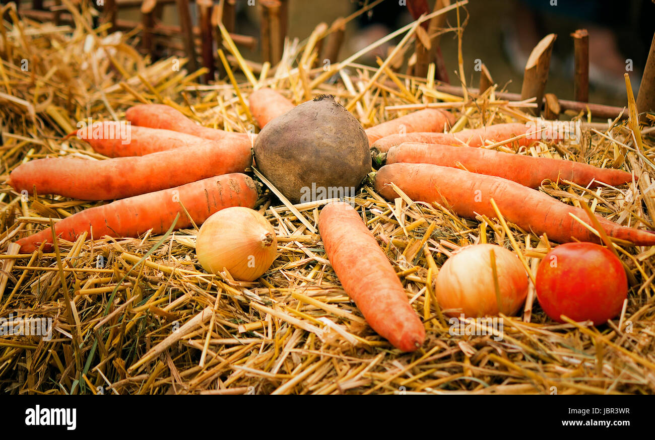 Carrots, beet, tomatoes, onions lie among straw. Are originally issued for goods advertizing. - Stock Image