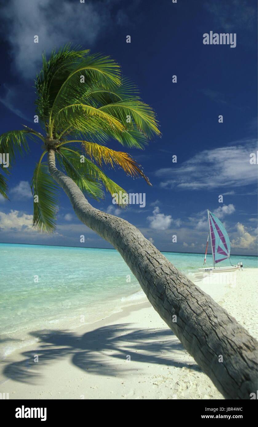 Der Traumstrand mit Palmen und weissem Sand an der Insel Velavaru im Southmale Atoll auf den Inseln der Malediven Stock Photo
