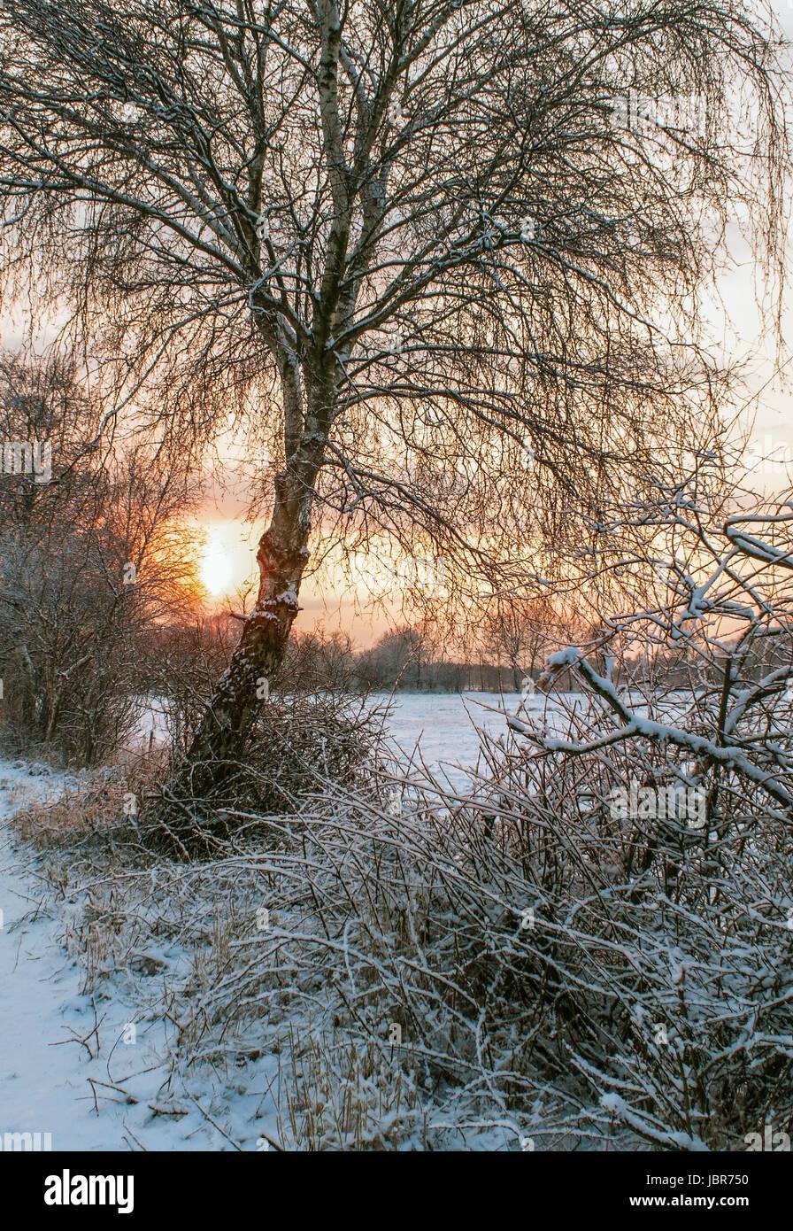 Blick in ein schneebedecktes Moor bei Sonnenuntergang Stock Photo