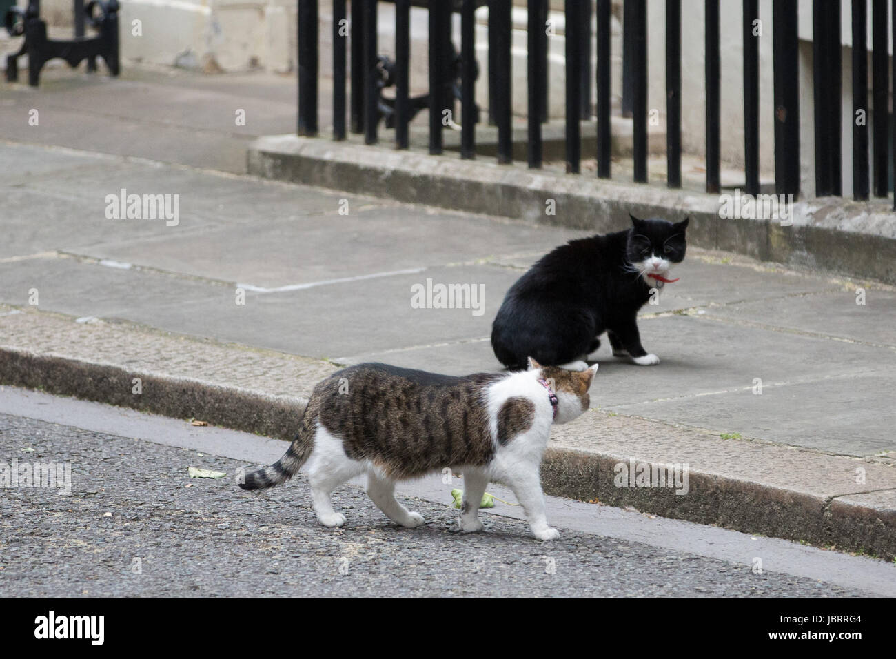 London, UK. 12th June, 2017. A tense standoff between Larry, Chief Mouser at 10 Downing Street, and Palmerston, - Stock Image