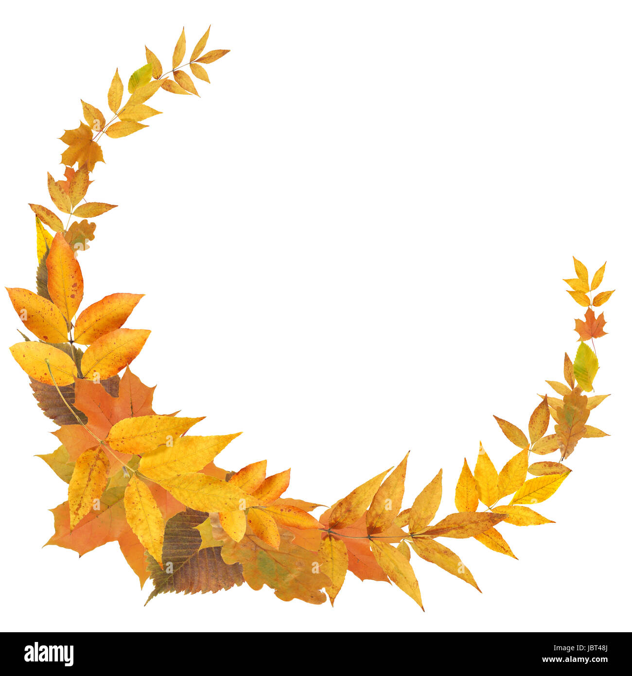 Nice frame made from yellow autumn leaves on white background Stock ...