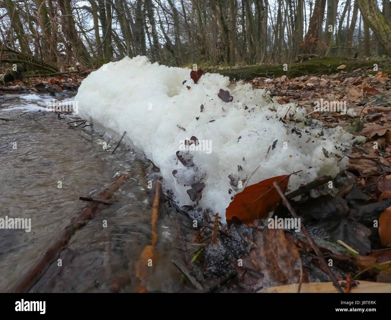 Schaum am Seeufer / foam on lake shore - Stock Image