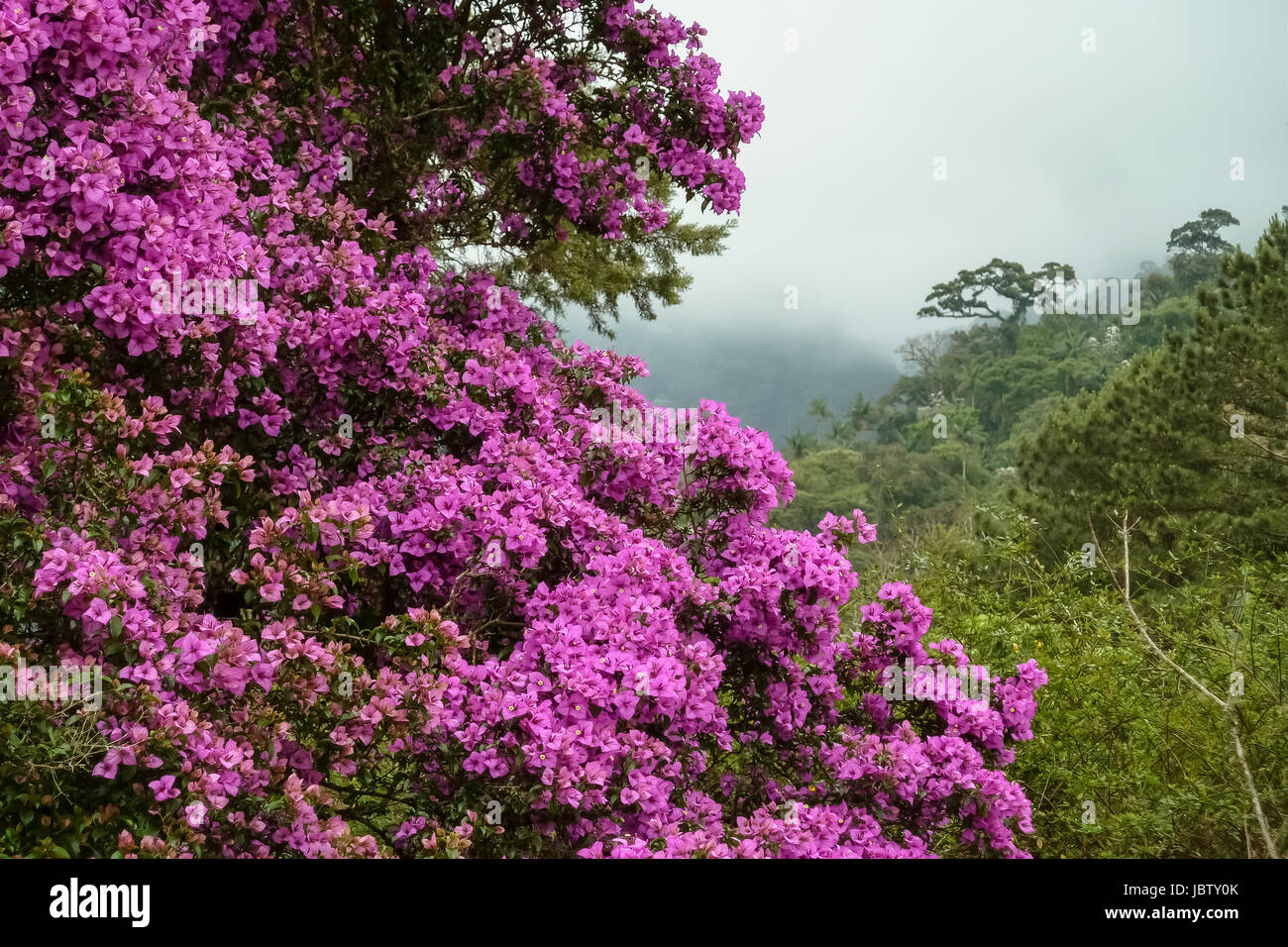 Atlantic Forest And Brazil Stock Photos & Atlantic Forest ...