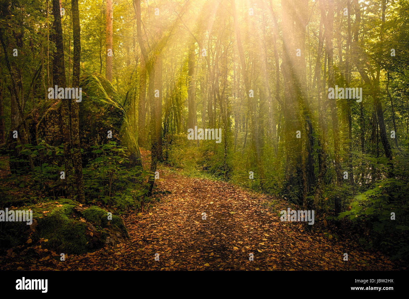 Idyllic path with sun flares at autumn morning in national park Finland Stock Photo