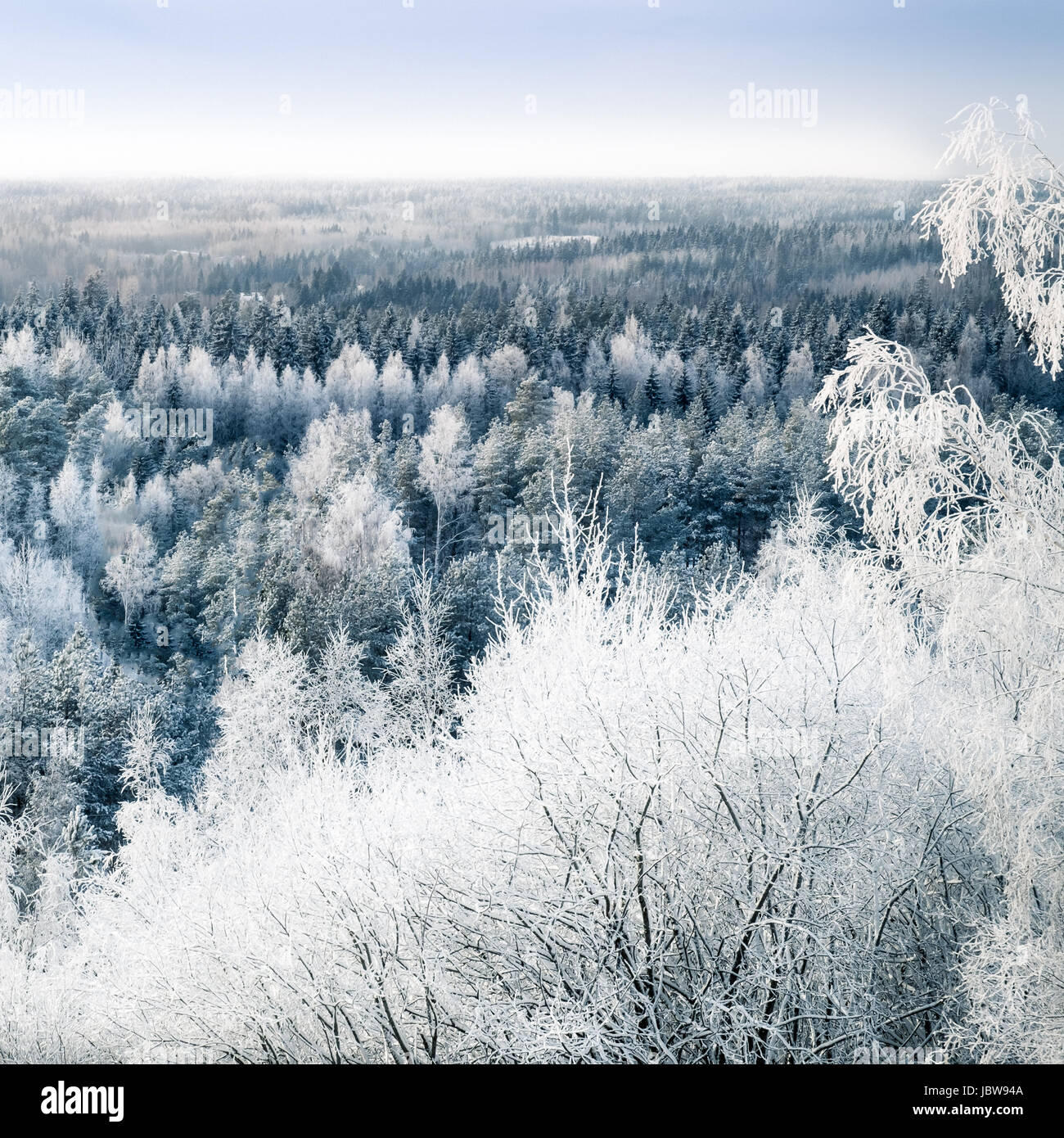 Scenic landscape with snow trees and sunset at cold winter day - Stock Image