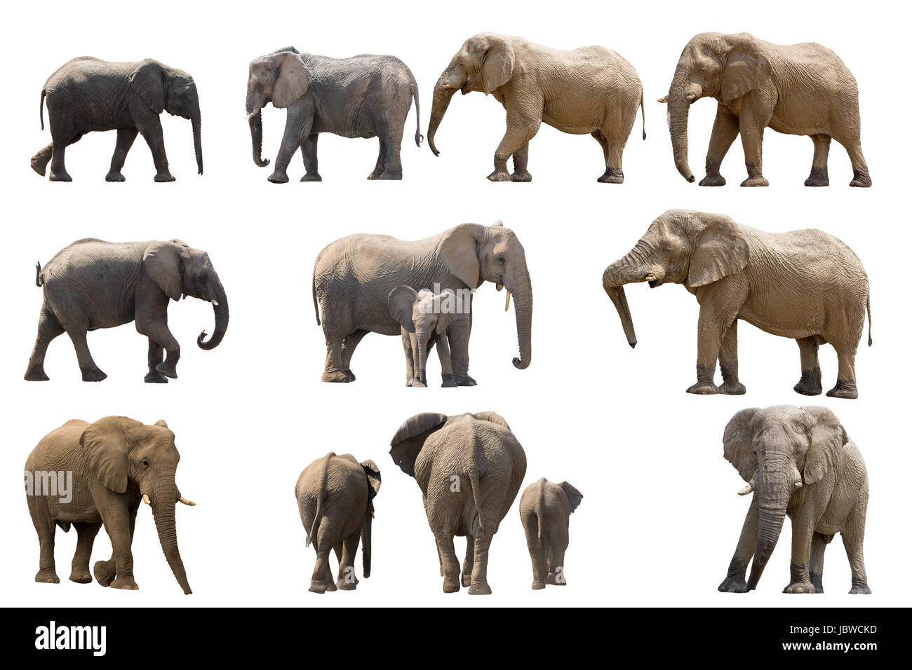collection of several elephants isolated on white background - Stock Image