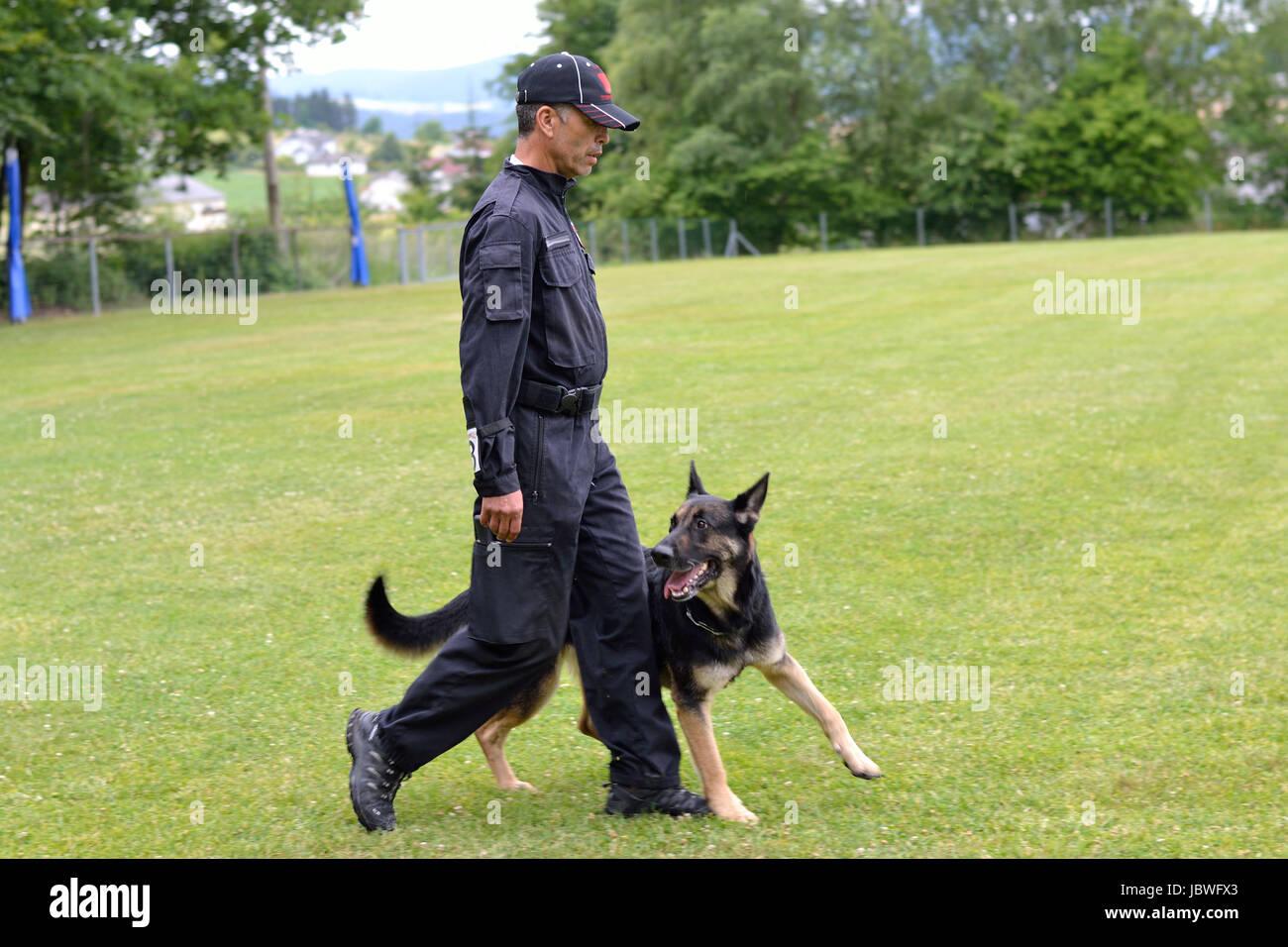 Deutscher Schaeferhund geht vorbildlich Fuss bei seinem Besitzer Stock Photo