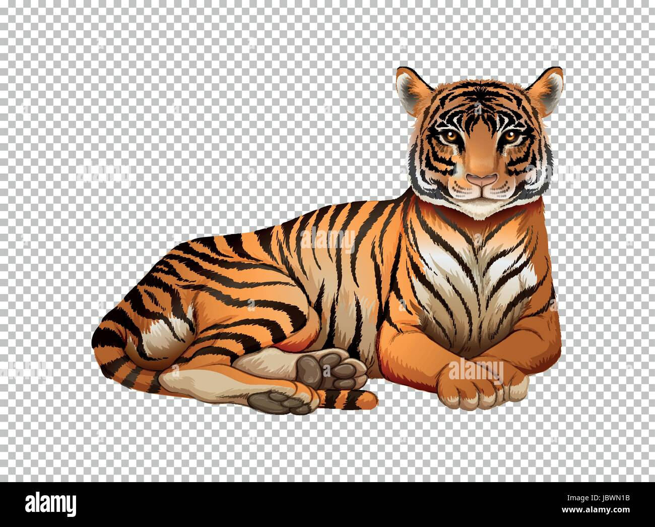 wild tiger on transparent background illustration stock vector art