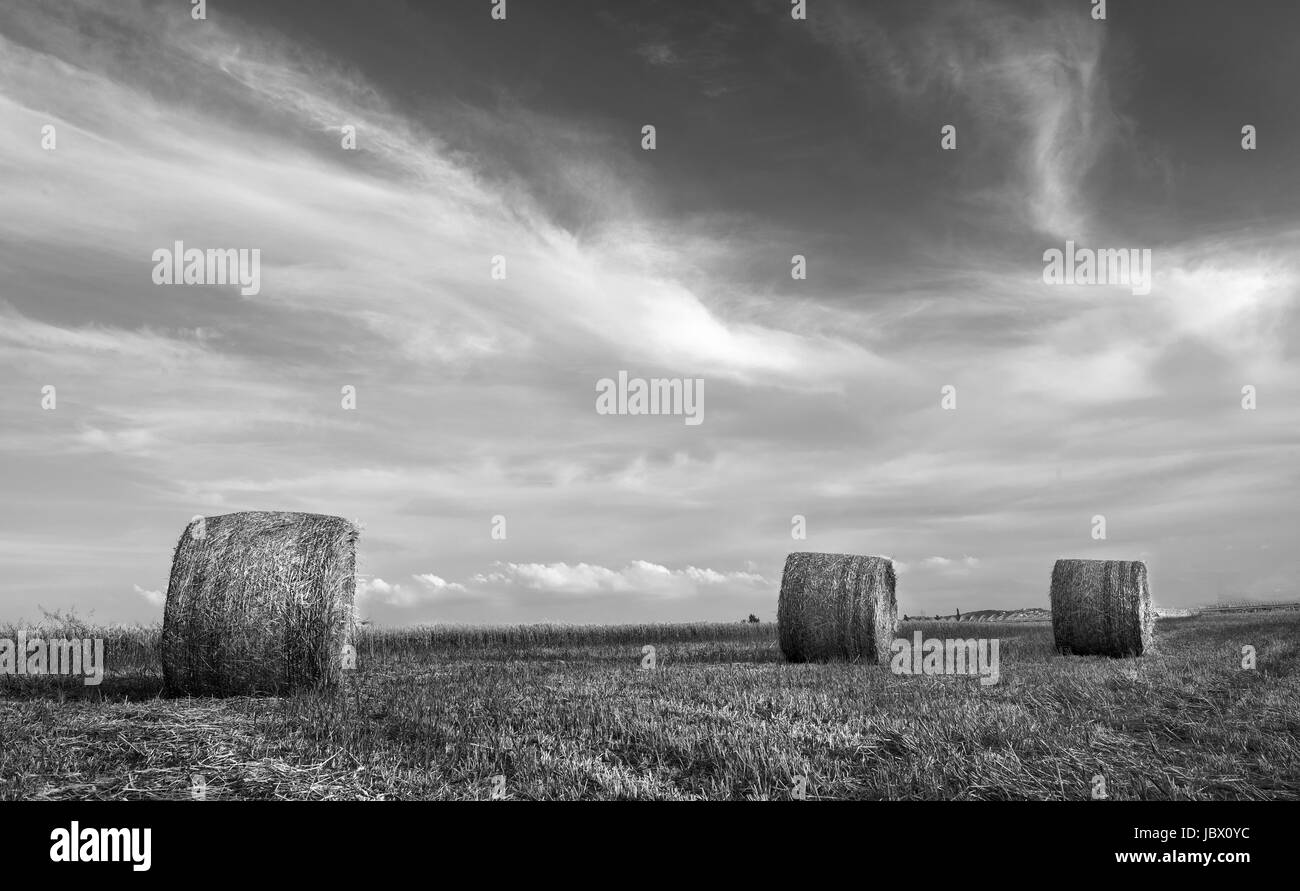 Black and white image of an Agriculture field of Round bales of hay after harvesting. - Stock Image