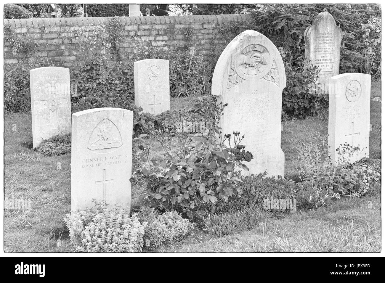 Military graves in churchyard at Lady St Mary Church Wareham, Dorset in June - Stock Image