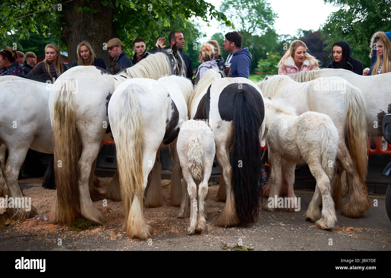 Horses lined up for sale in Appleby at the Appleby Horse Fair. Stock Photo