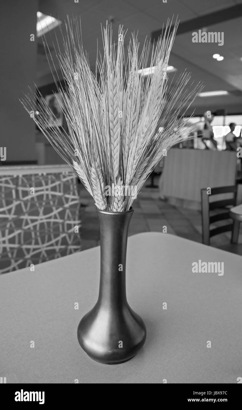Wheat in a vase decorations in a fast food restaurant.. - Stock Image