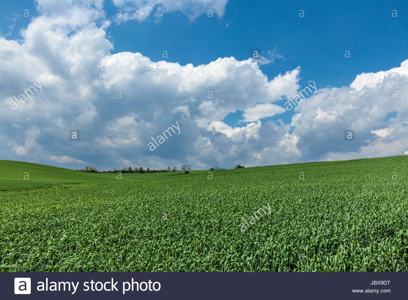 Afternoon cumulus congestus clouds forming from conditions of high humidity and rising hotter air over farm fields - Stock Image