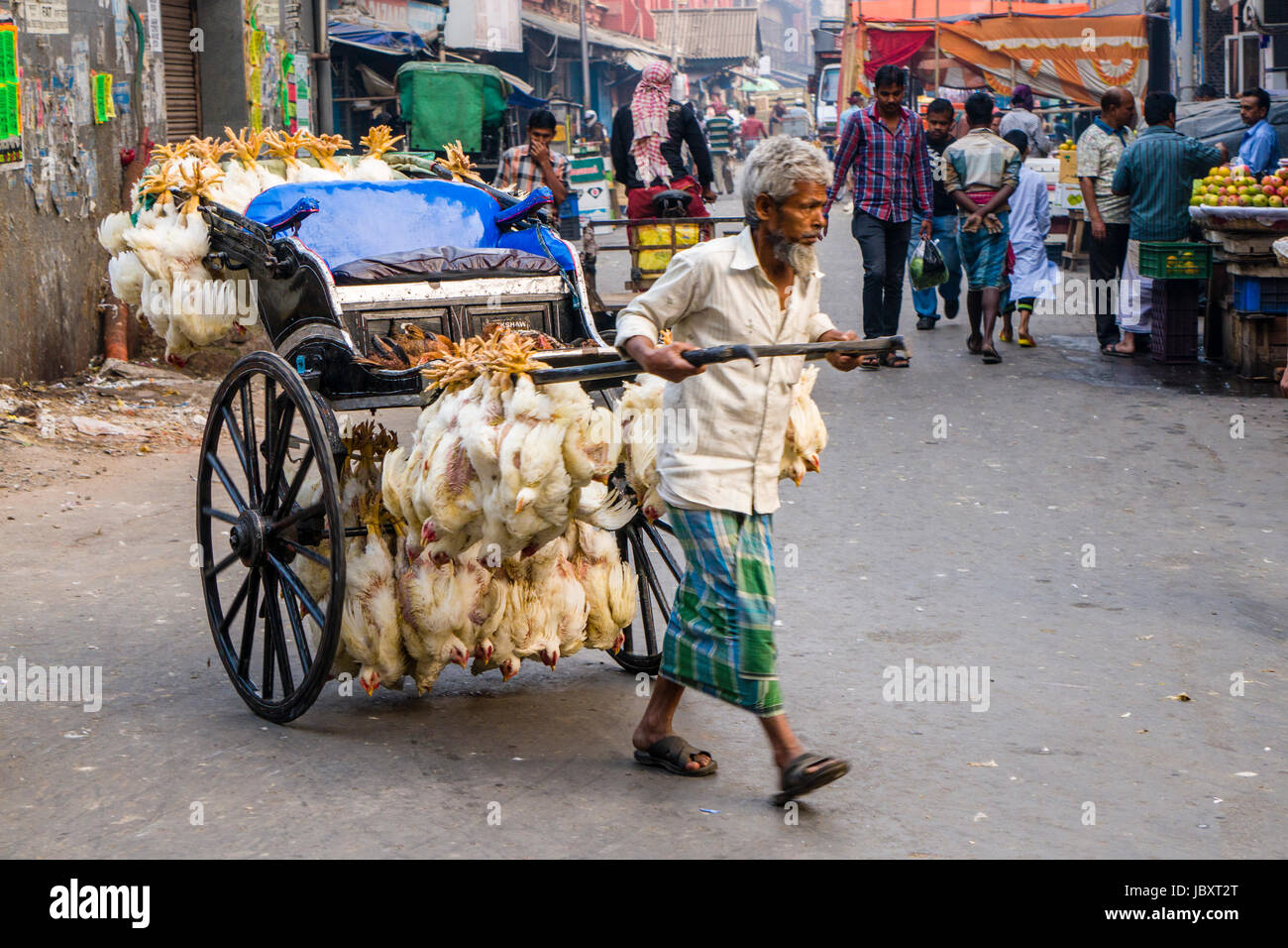 Chicken are bound together and transported by pull rickshaw in the suburb New Market Stock Photo