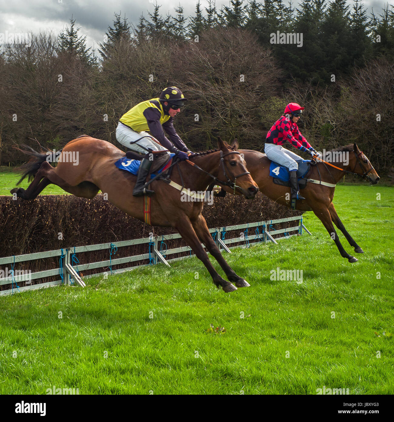 Point to Point horse jumping, Eggesford Hunt, England uk Stock Photo