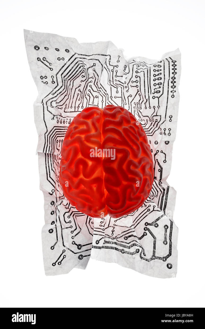 Brain - Stock Image