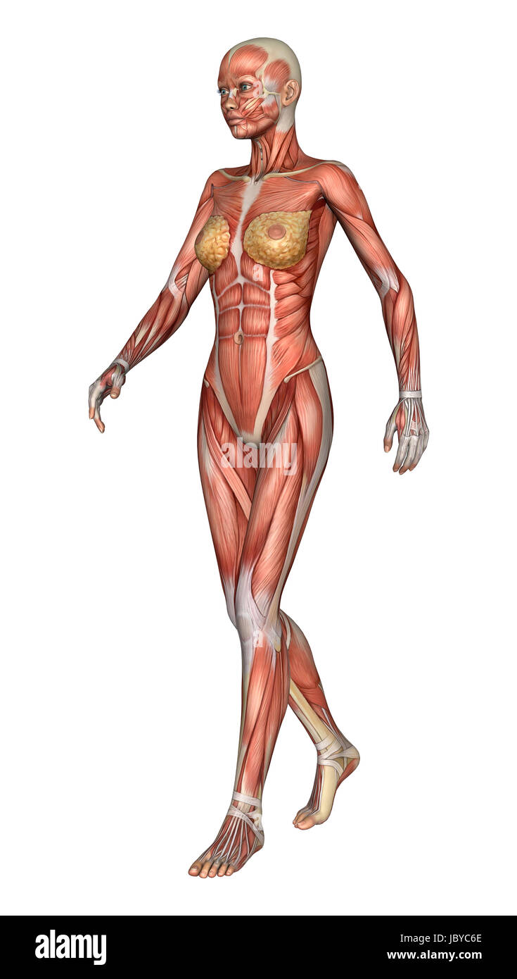 3D digital render of a walking female anatomy figure with muscles ...