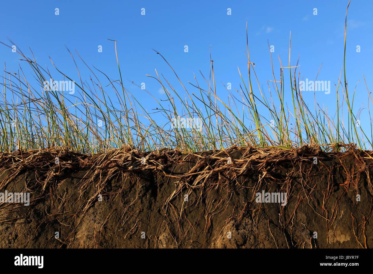 Erosion of the Soil - Stock Image