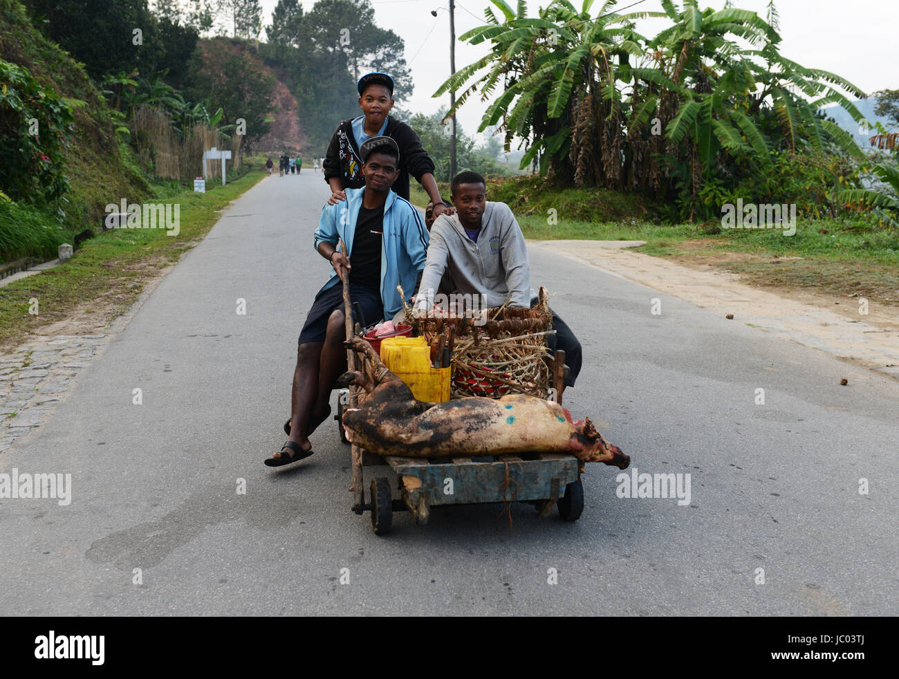 Carrying a slaughtered pig in central Madagascar. - Stock Image