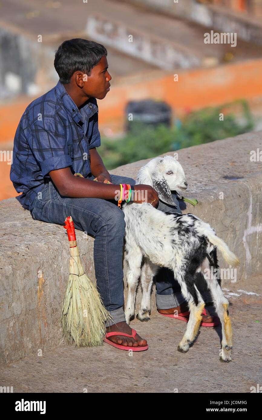 Local boy sitting on a stone wall with a goat, Jaipur, India. Jaipur is the capital and largest city of the Indian - Stock Image