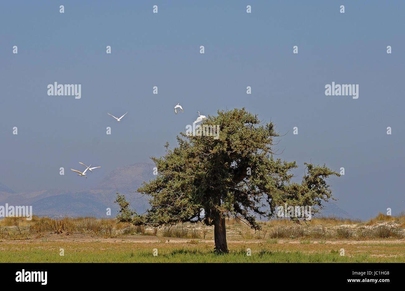 tree on kos Stock Photo
