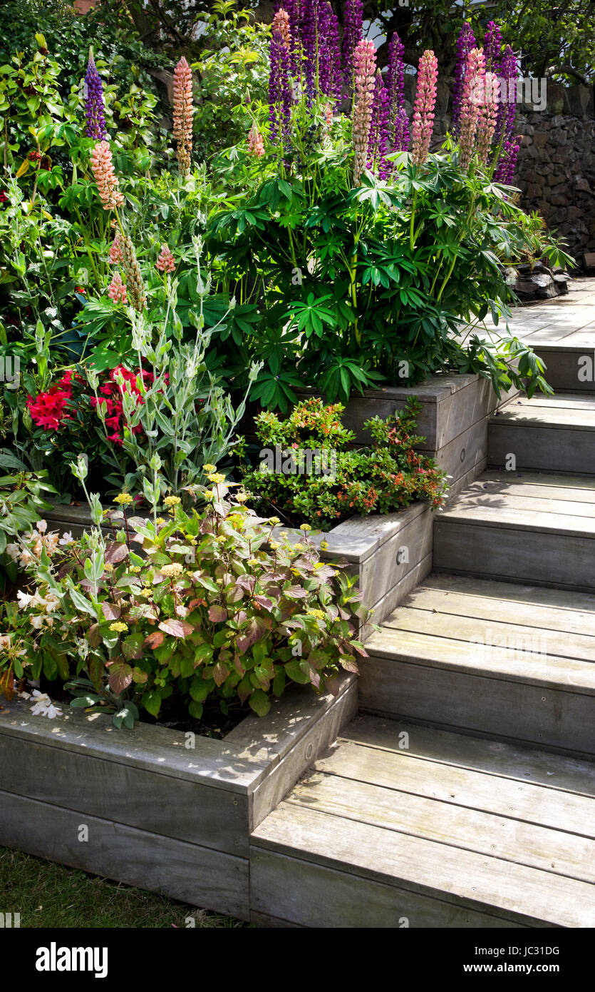 wooden painted steps and tiered borders in english garden - Stock Image