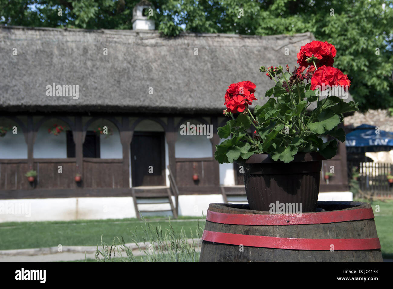 Countryside, Serbia - A pot of the Red Geraniums on a wooden barrel in front of the traditional thatched roof village - Stock Image