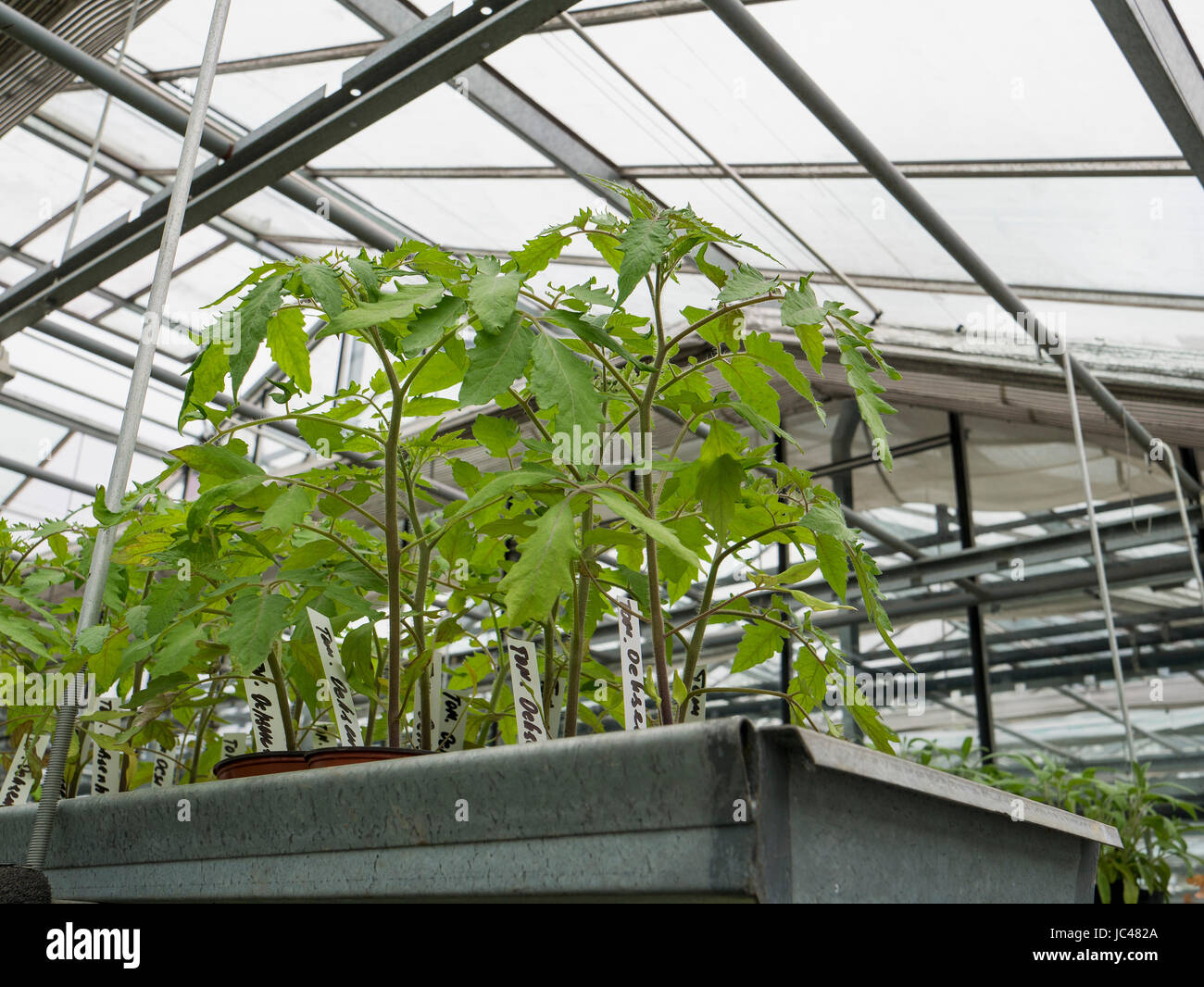 Greenhouse for Naturophatic Medicine, A. Vogel in Rogwil, Canton Thurgau, Switzerland - Stock Image