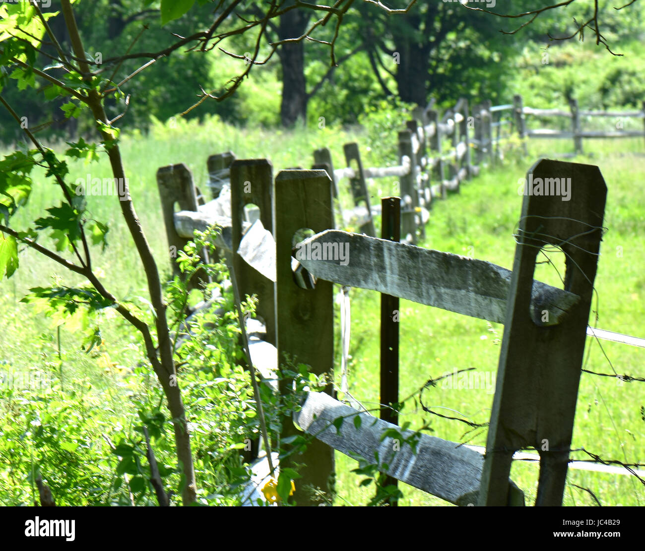 A wooden fence weaves through a pasture in summertime green. - Stock Image