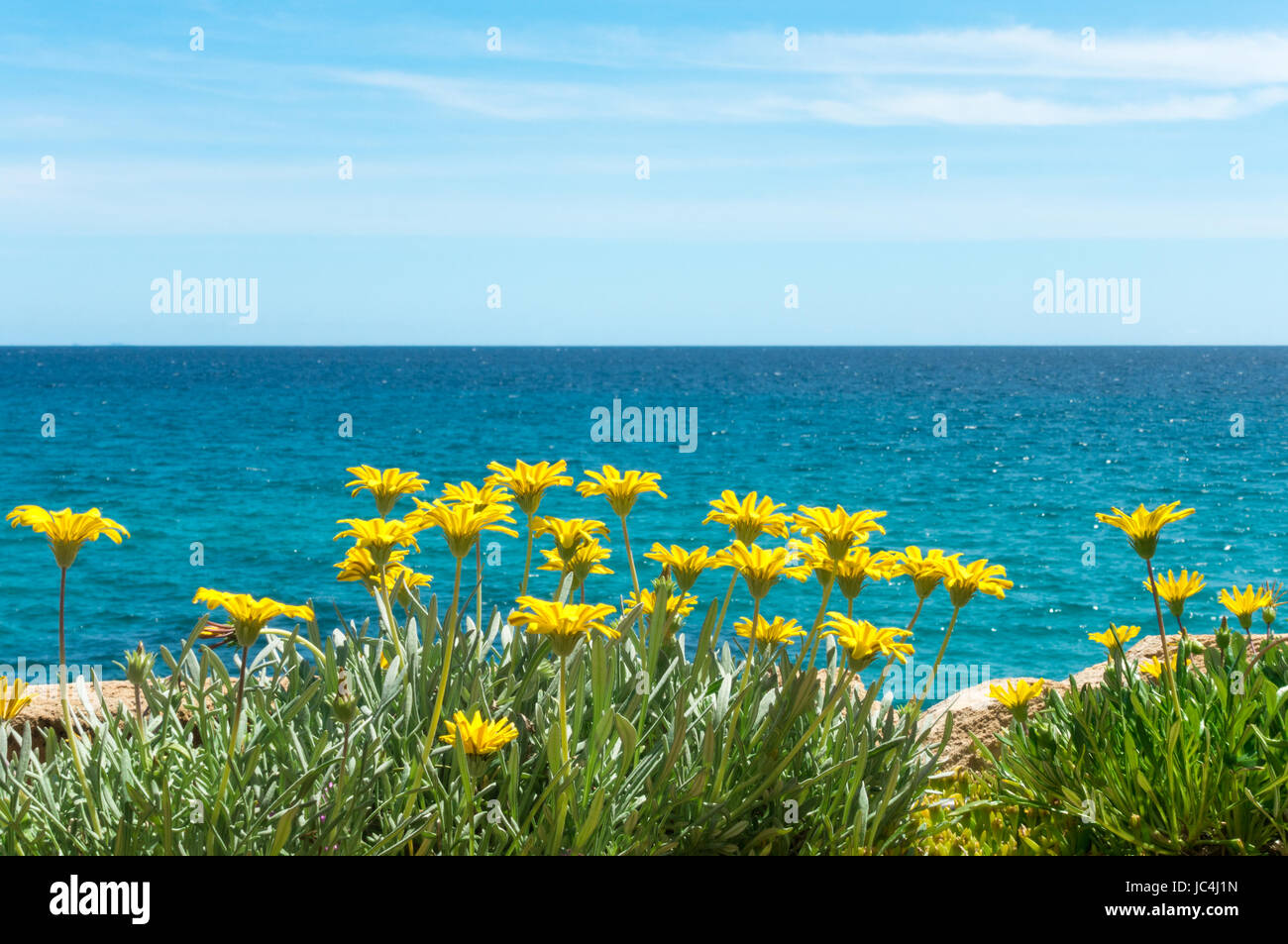 Yellow flowers with blue sea water and sky in background