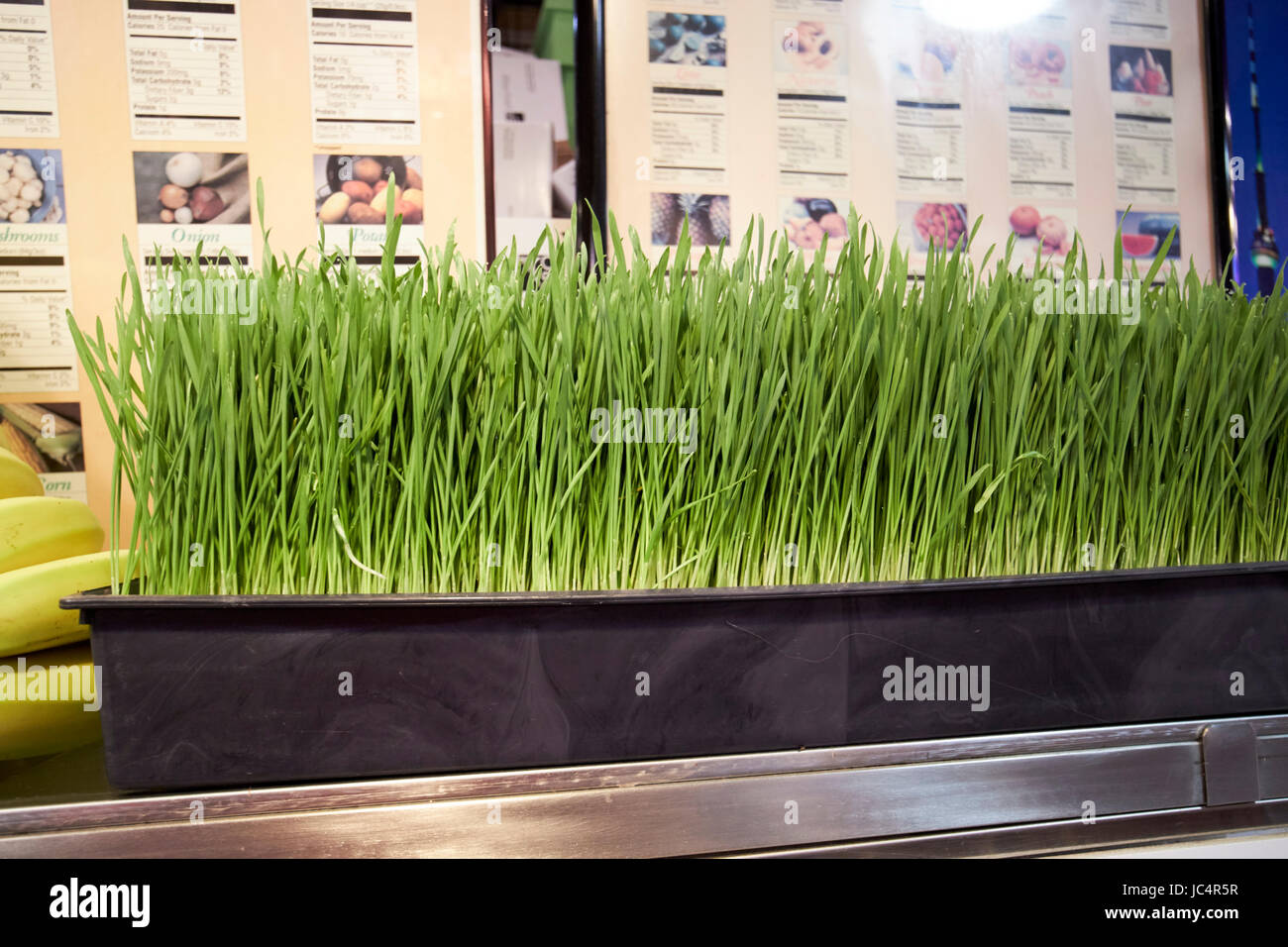 fresh wheatgrass for sale - Stock Image