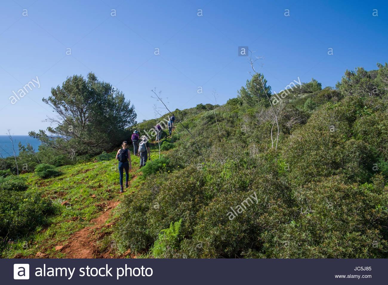 Members of the REI Adventures Portugal coastal hiking tour walking through the lush green Algarve coastline, Southwest - Stock Image