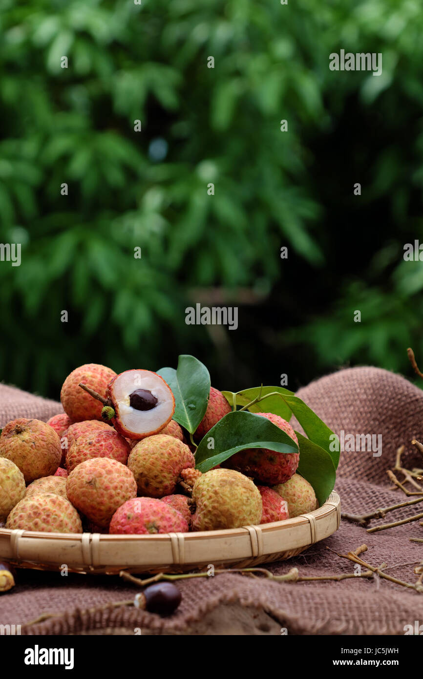 Close up of litchi fruit or lychee fruits, a tropical agriculture product at Luc Ngan, Bac Giang, Vietnam, basket - Stock Image